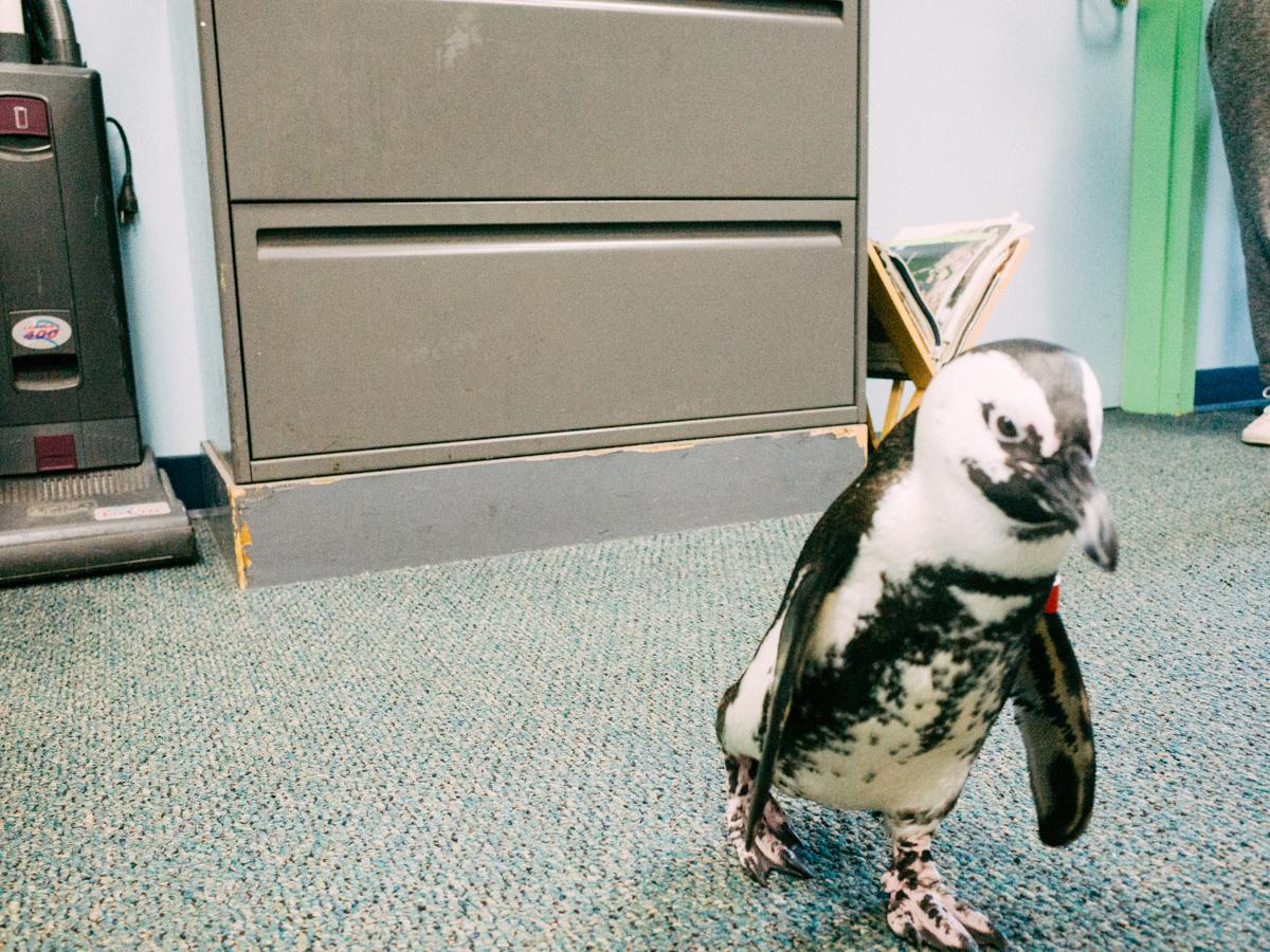 wrenee-audubon-backstage-penguin-pass-18.jpg