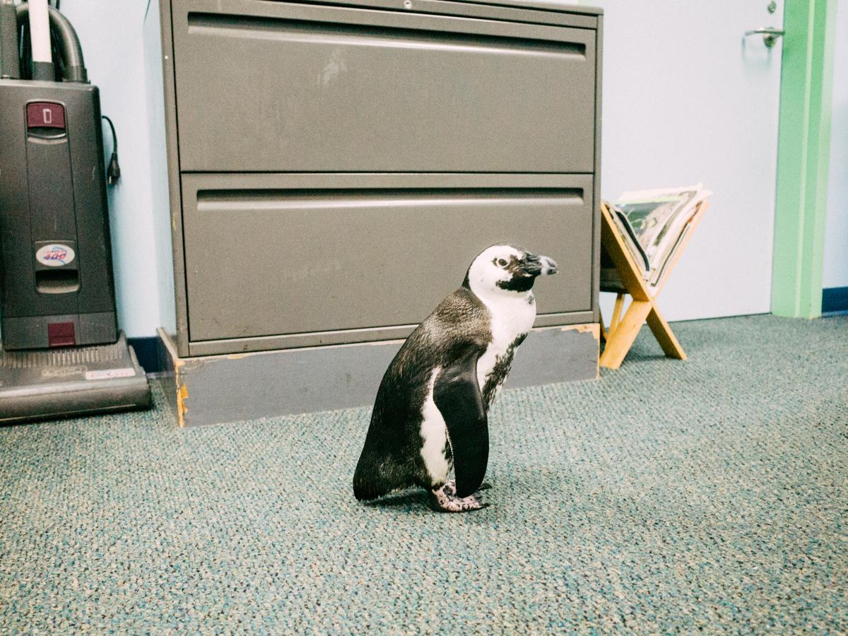 wrenee-audubon-backstage-penguin-pass-17.jpg