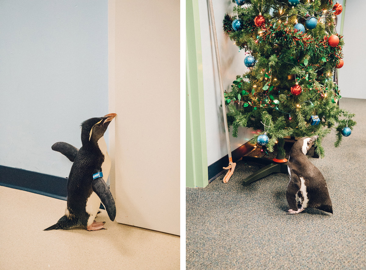 Bunny enjoys feeling the breeze coming in the door, and Humpty playing with the ornaments on the Christmas tree.