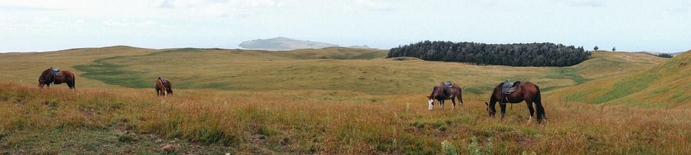 Horses taking a break on our horseback ride to the highest volcano peak on the island.