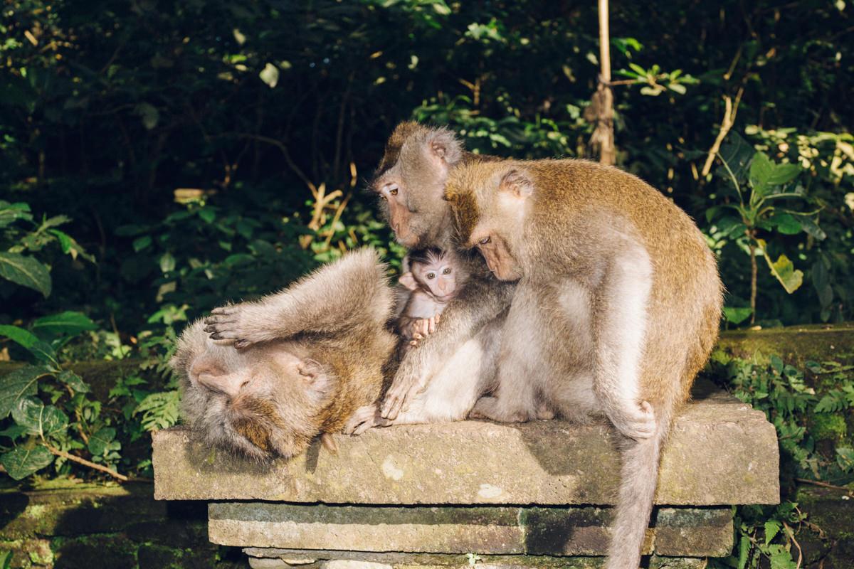 wrenee-bali-indonesia-6.jpg