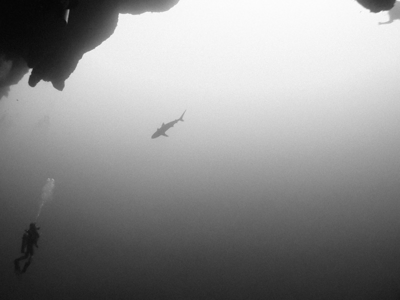 View of a diver and a reef shark from 130 feet.