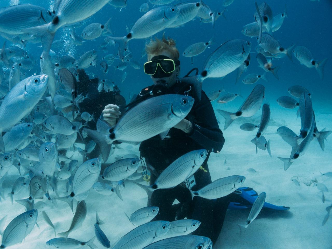 Fish feeding frenzy at Comino Island