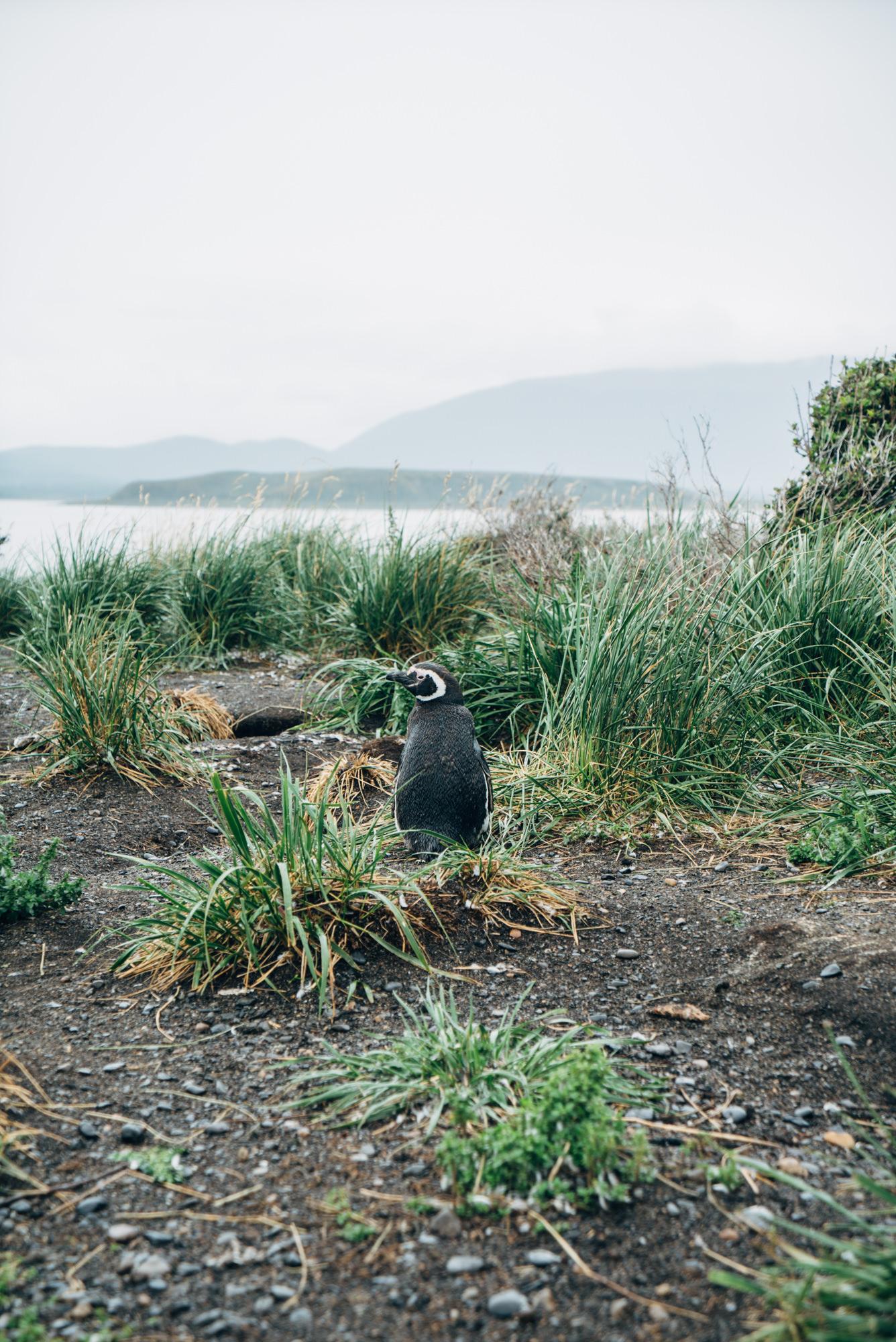 wrenee-ushuaia-argentina-23.jpg