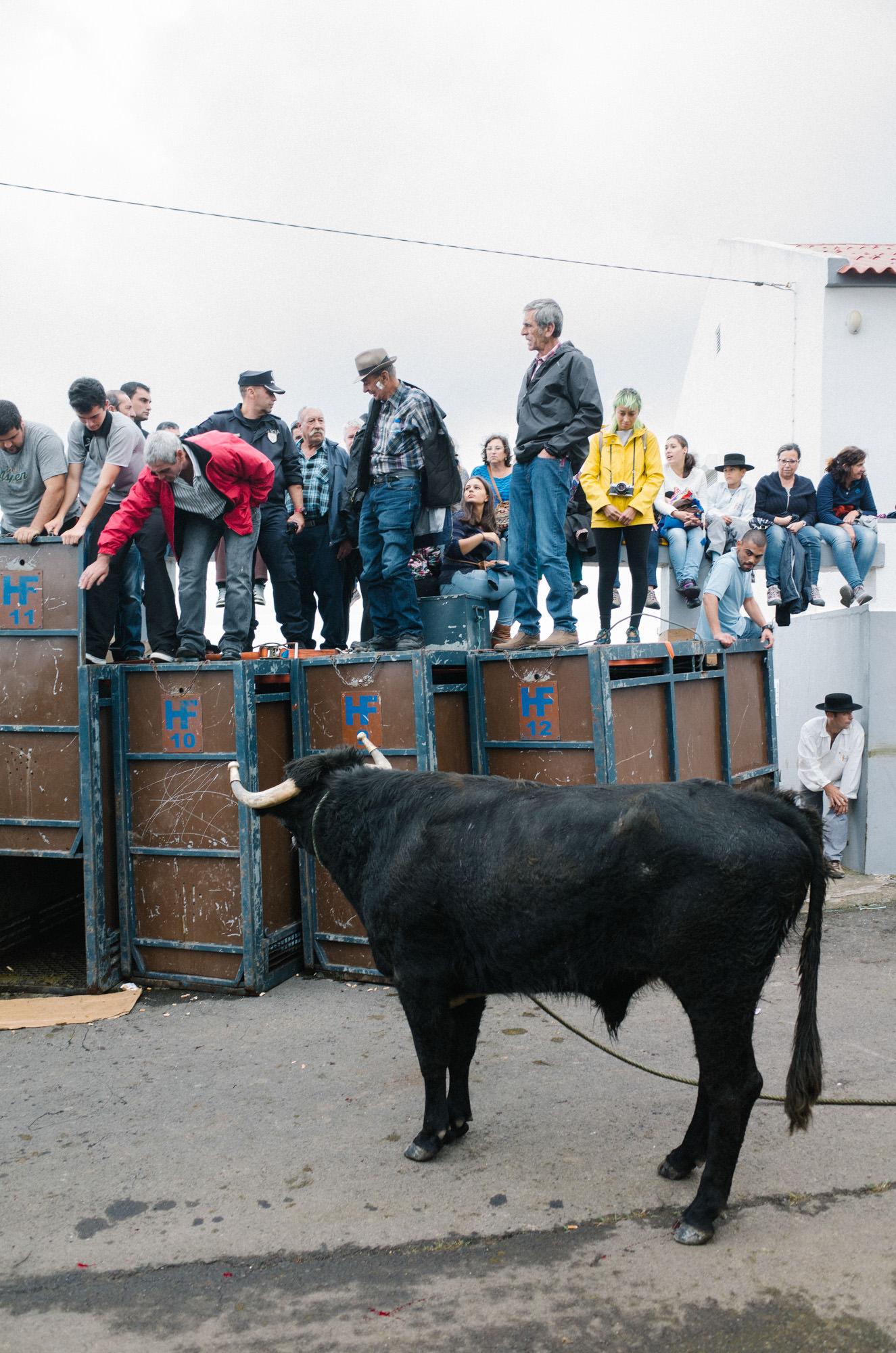 wrenee-renee-lusano-azores-portugal-30.jpg