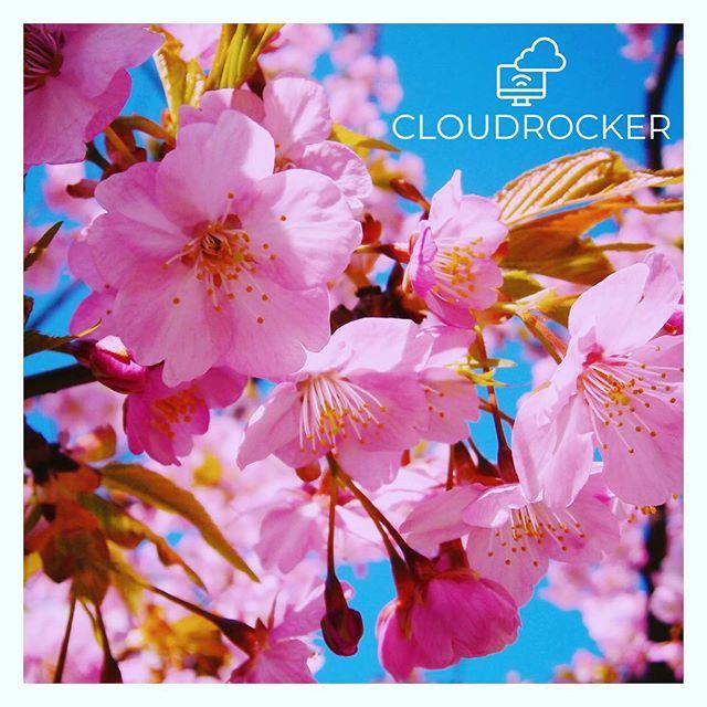 Alles Blüte oder was? Endlich wird das Wetter wieder besser und unsere Fotografen laufen wieder zu Höchstform auf. @luckyluxem @eriksfotowelt2018 @schmidtbild #bonn #kirschblütenbonn #kirschblütenbonn2019 #blüten #frühlingsgefühle #köln #koblenz #endlichfrühling #fotografen #cloudrocker #sonnesatt #dedenbach #vanlifegermany