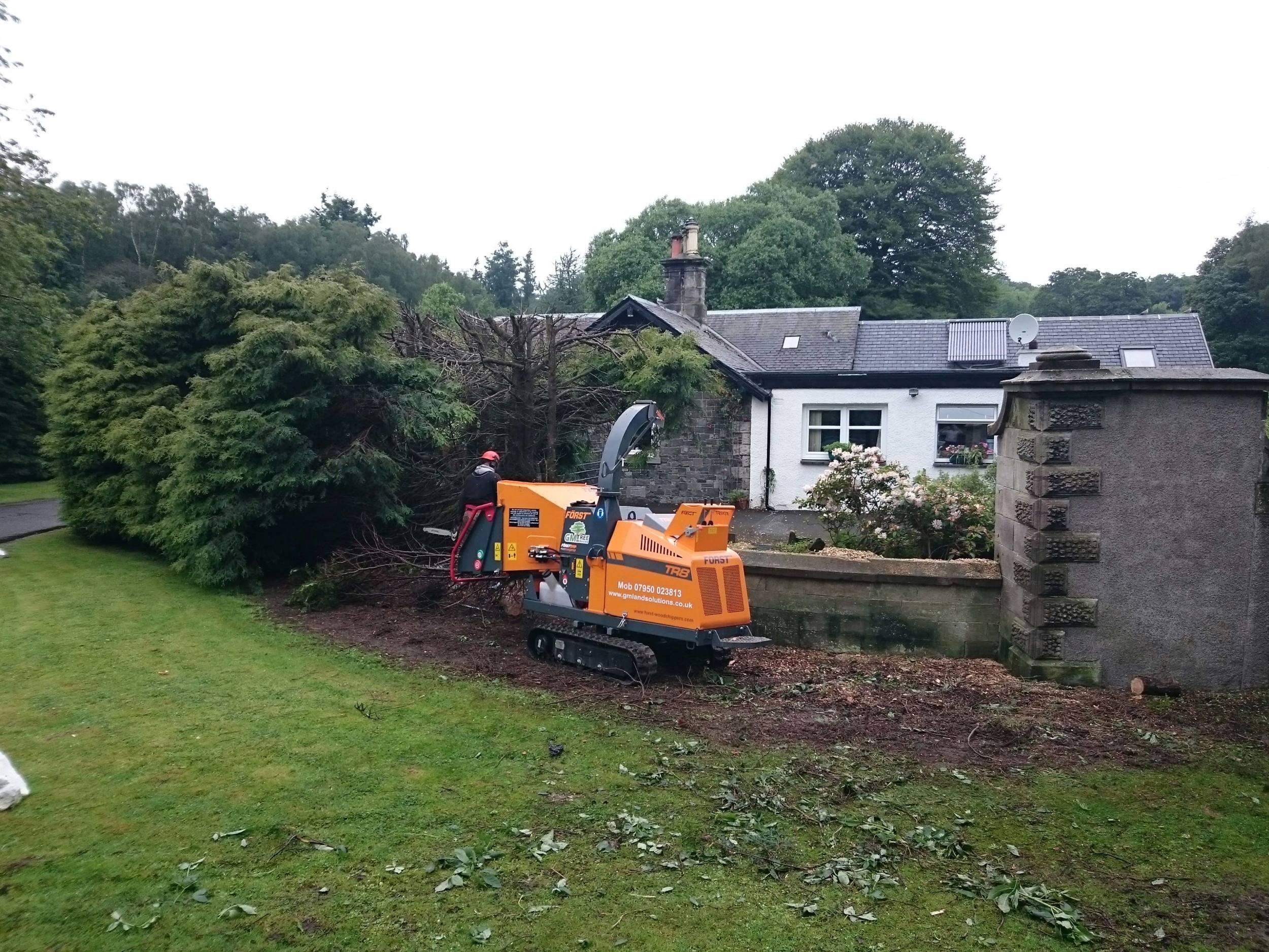Leylandii hedge removal
