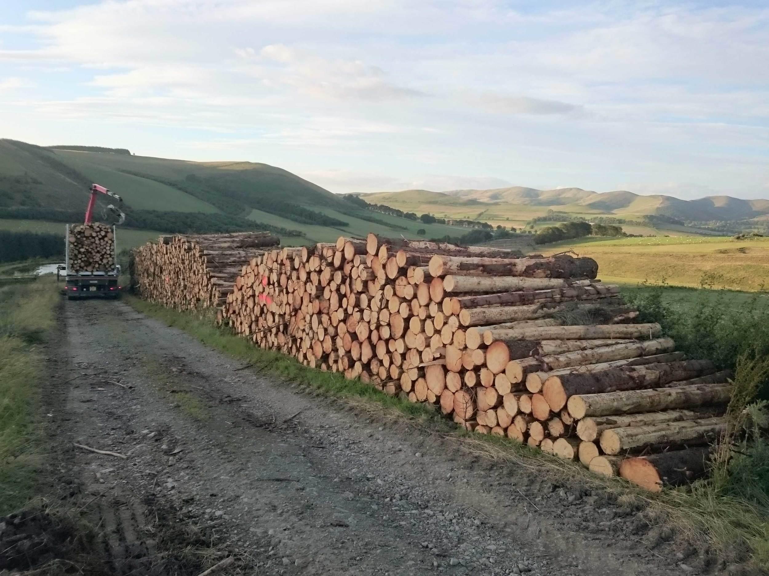 Timber - harvesting