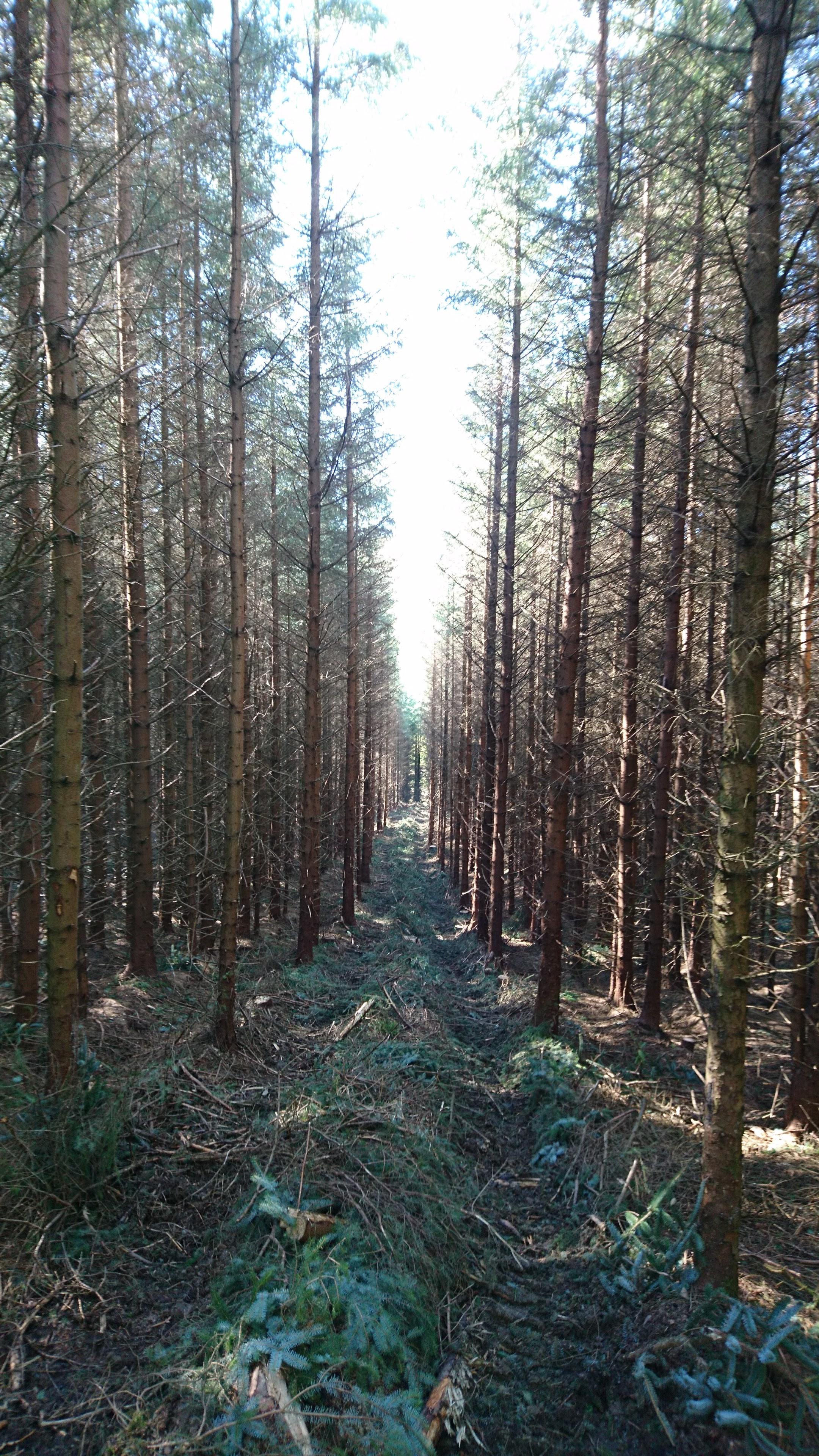 Timber felling