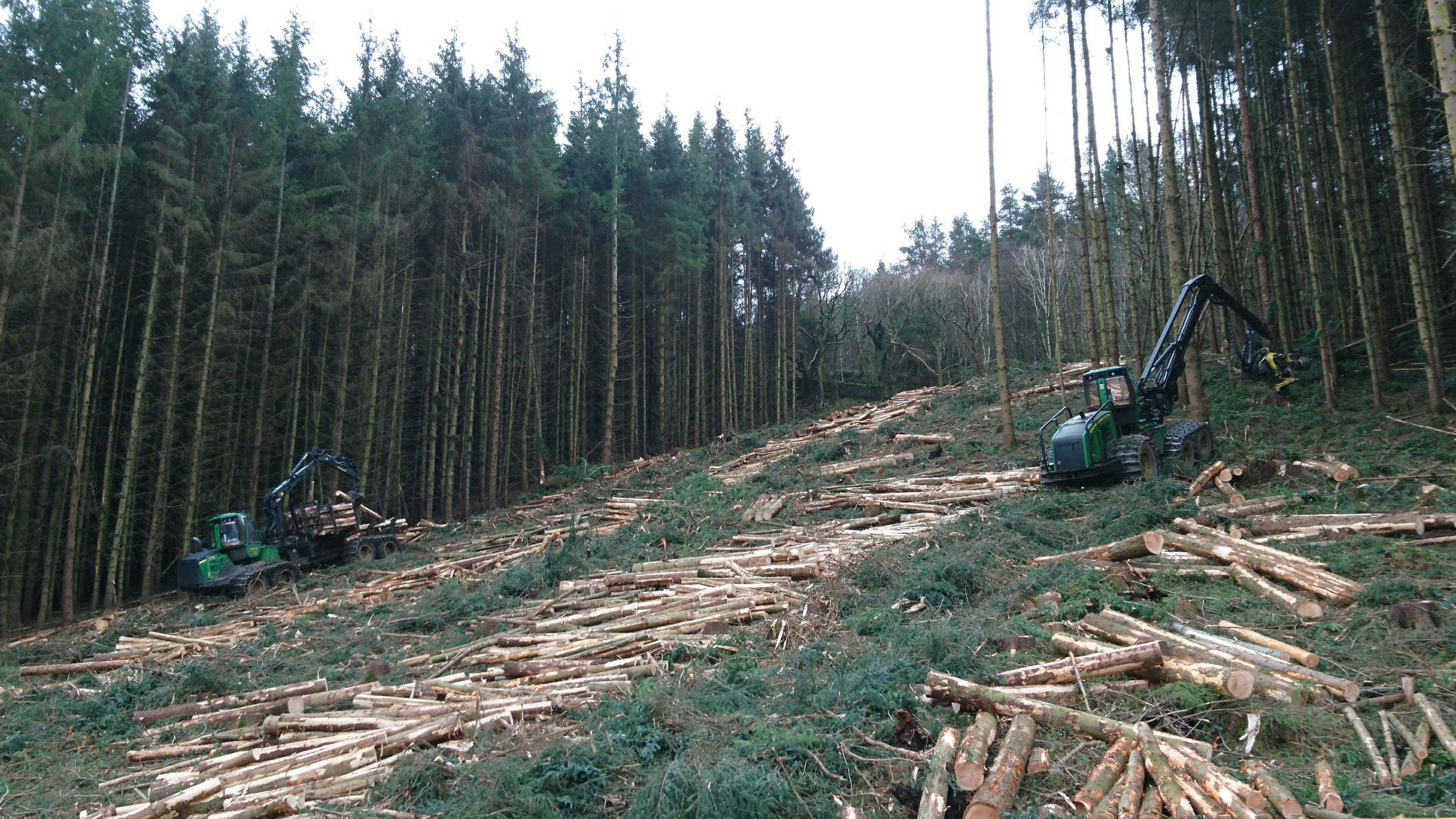 wORK IN PROGRESS ON A RECENT 3,500 TONNE CLEAR FELL IN THE SCOTTISH BORDERS