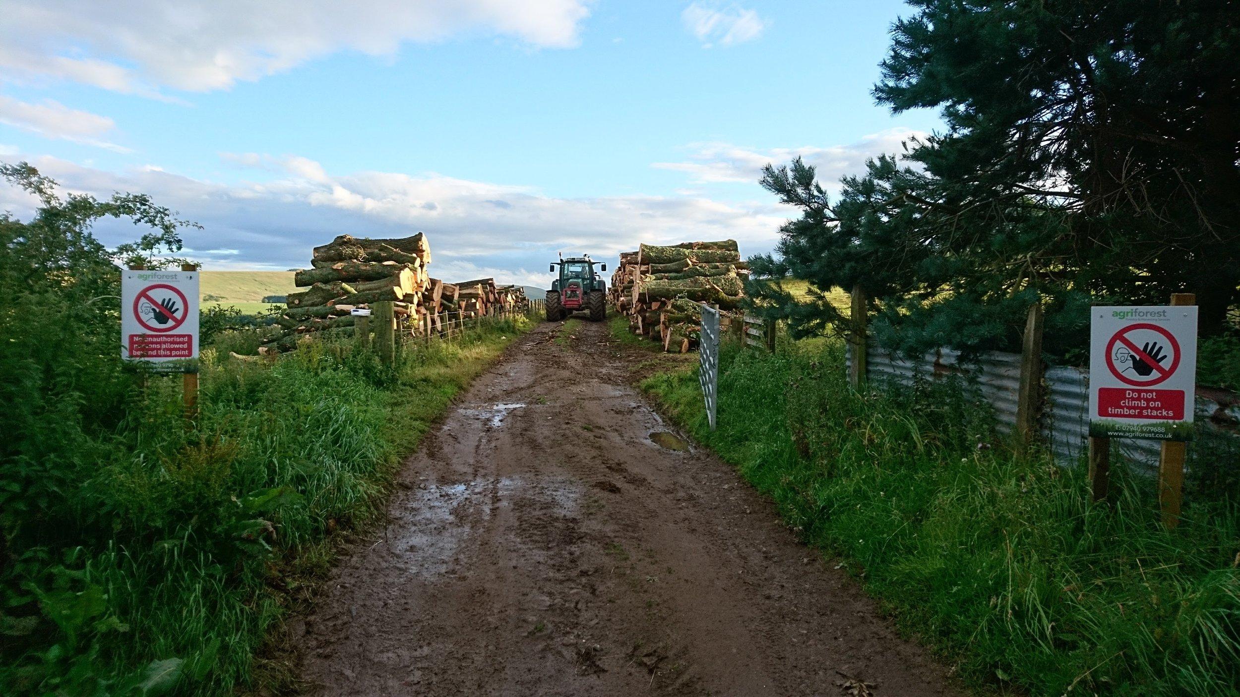 Hardwood timber extraction,mIDLOTHIAN, SOUTH OF EDINBURGH