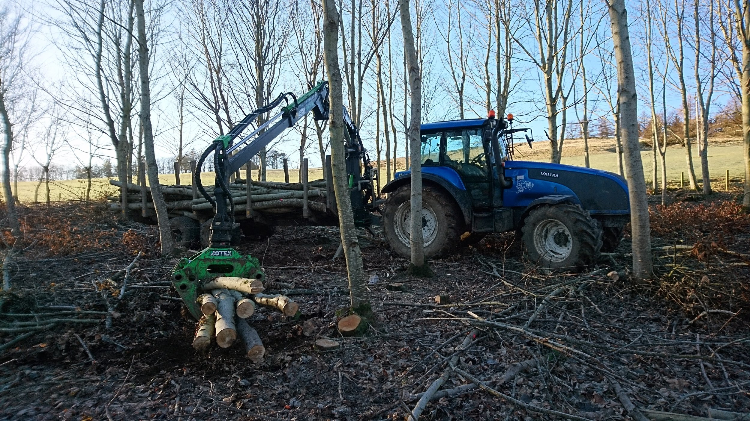 Extracting sycamore & ash from a small thinnings site in the scottish borders