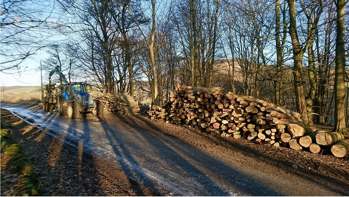 fIREWOOD EXTRACTED TO ROADSIDE & READY FOR UPLIFT VIA TIMBER LORRY
