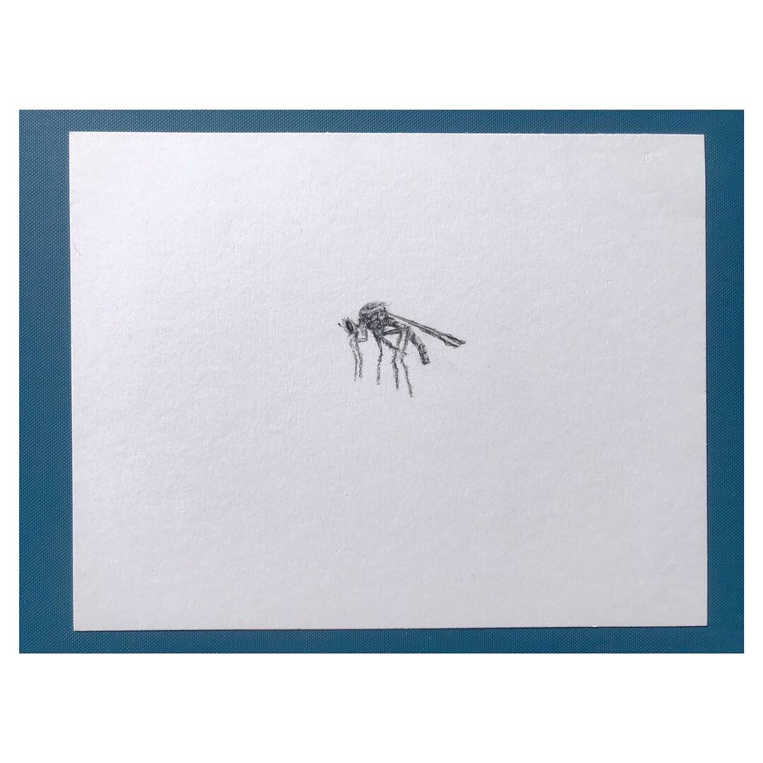 Asilidae (Robber Fly) • Graphite on archival paper ∙ 7 x 9in ∙ 2019
