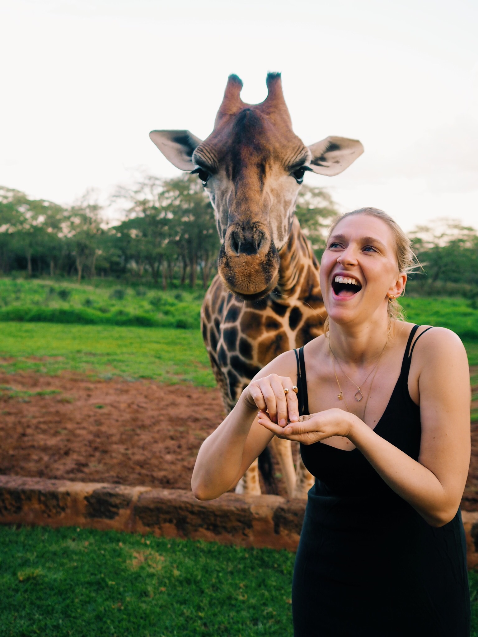 Having a giraffe