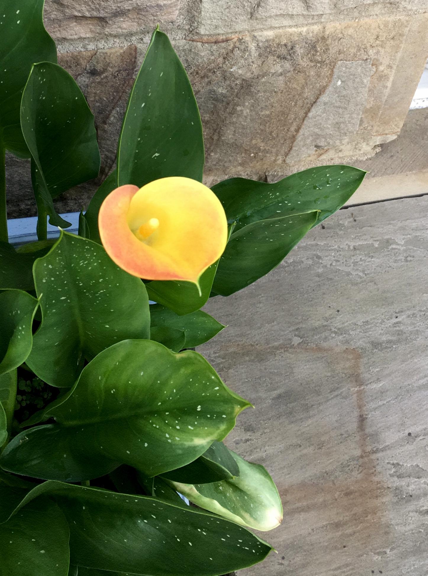 Horton Flower.jpg