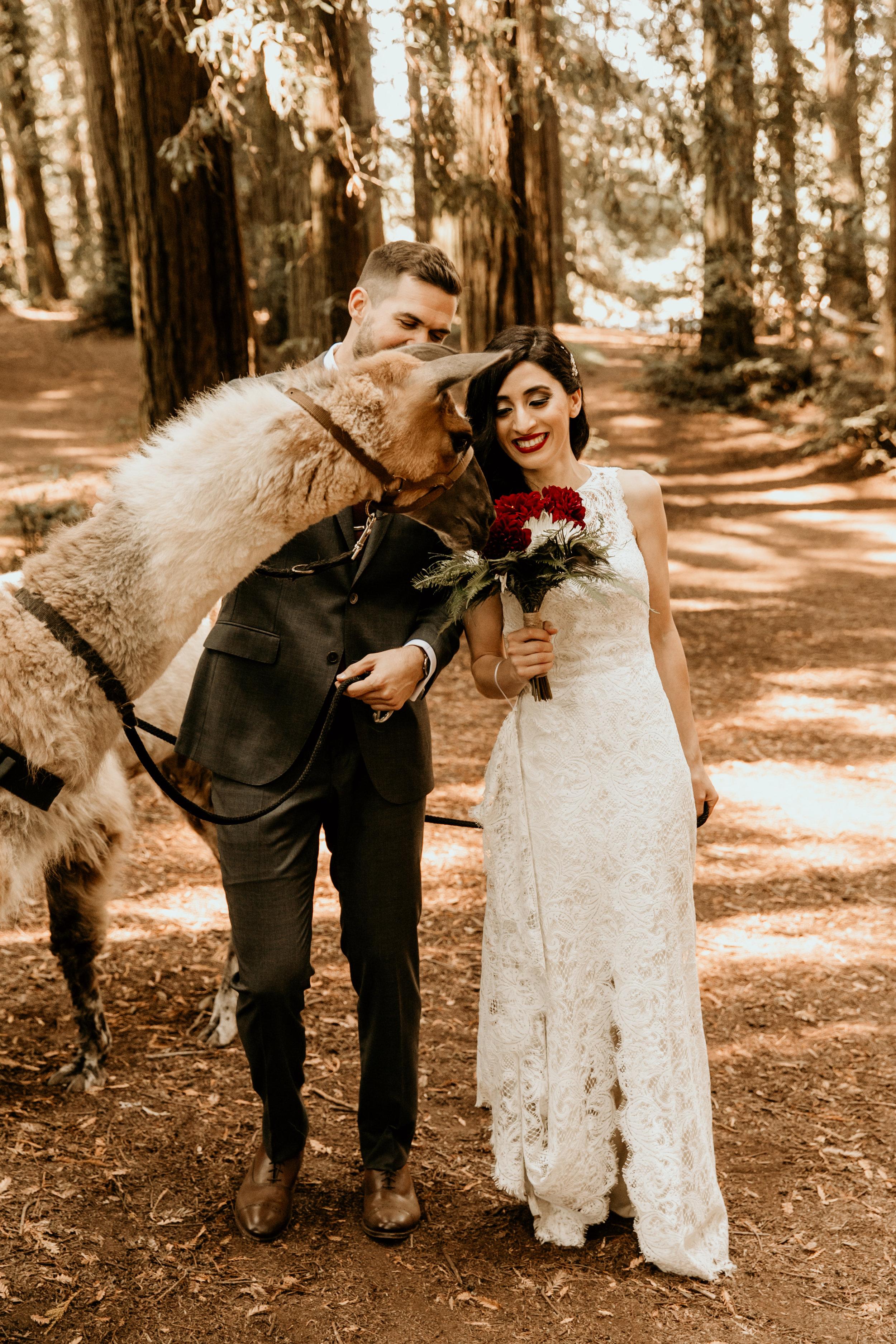 Shadia & Chris Wedding -158.jpg