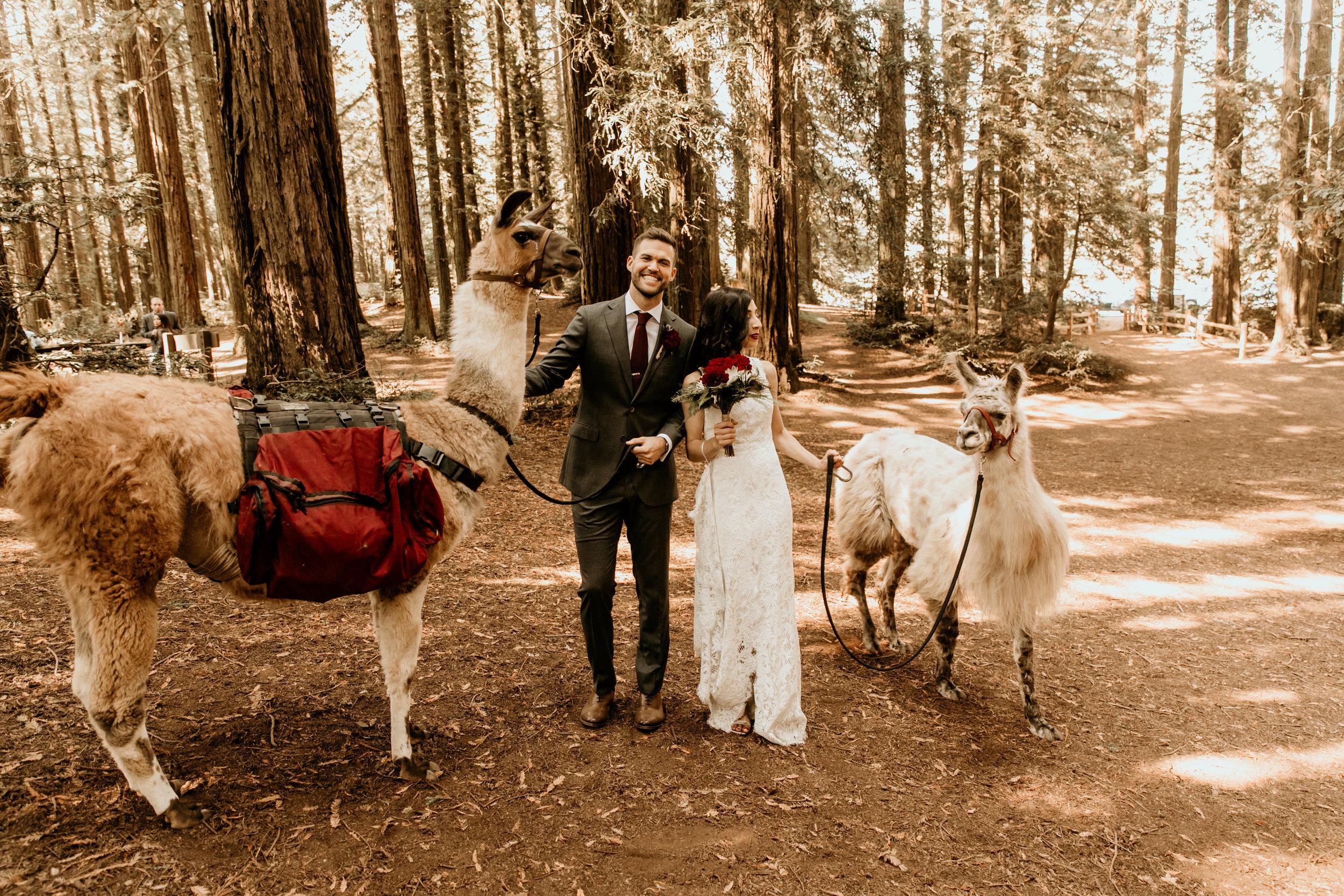 Shadia & Chris Wedding -159.jpg