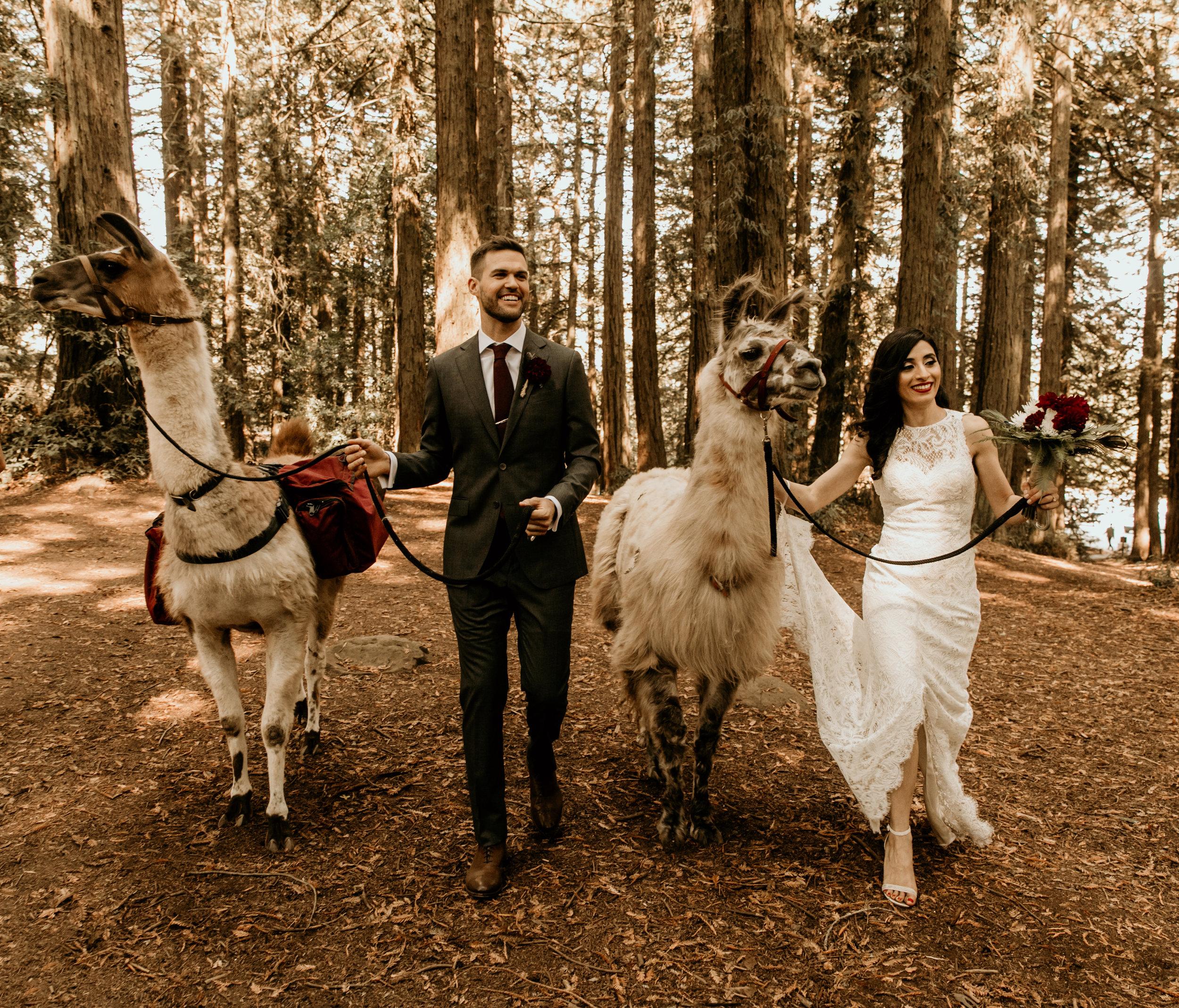 Shadia & Chris Wedding -169.jpg
