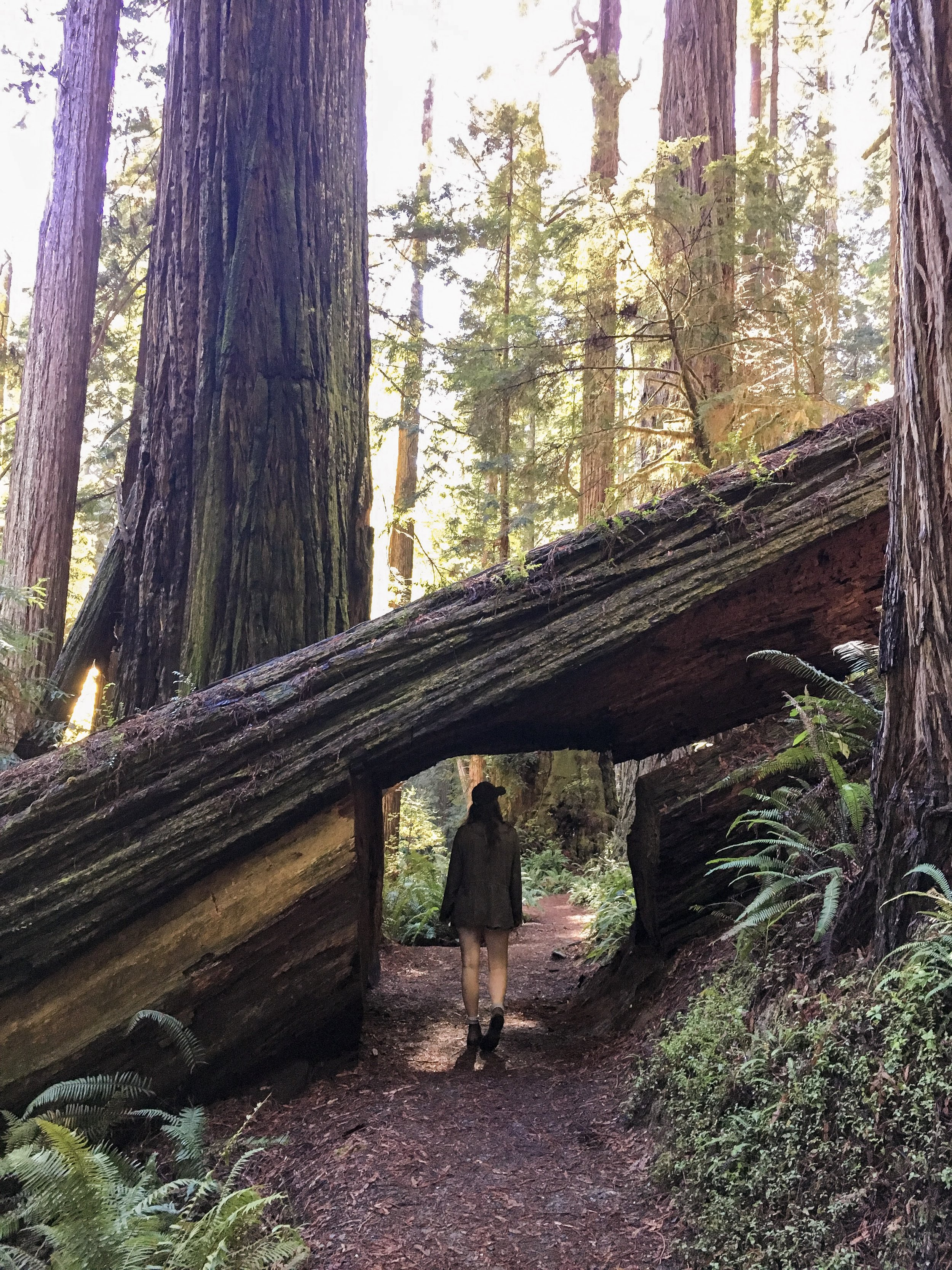 Redwood National and State Parks, Prairie Creek Trail, California, USA (photos by  Kristin )