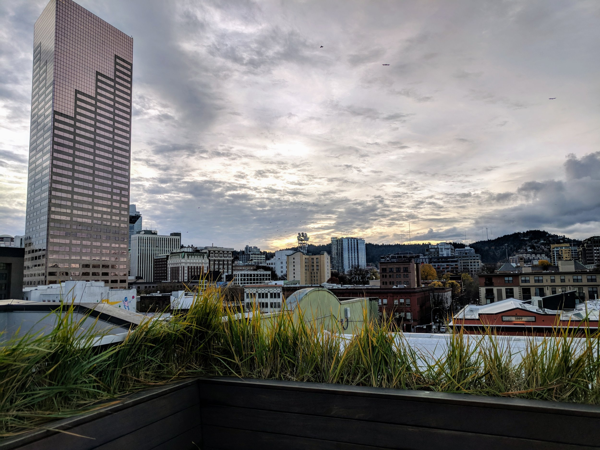society-hotel-rooftop-view.jpg