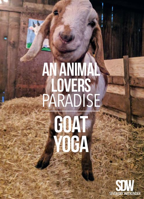 Pinterest-GoatYoga-v2.jpg