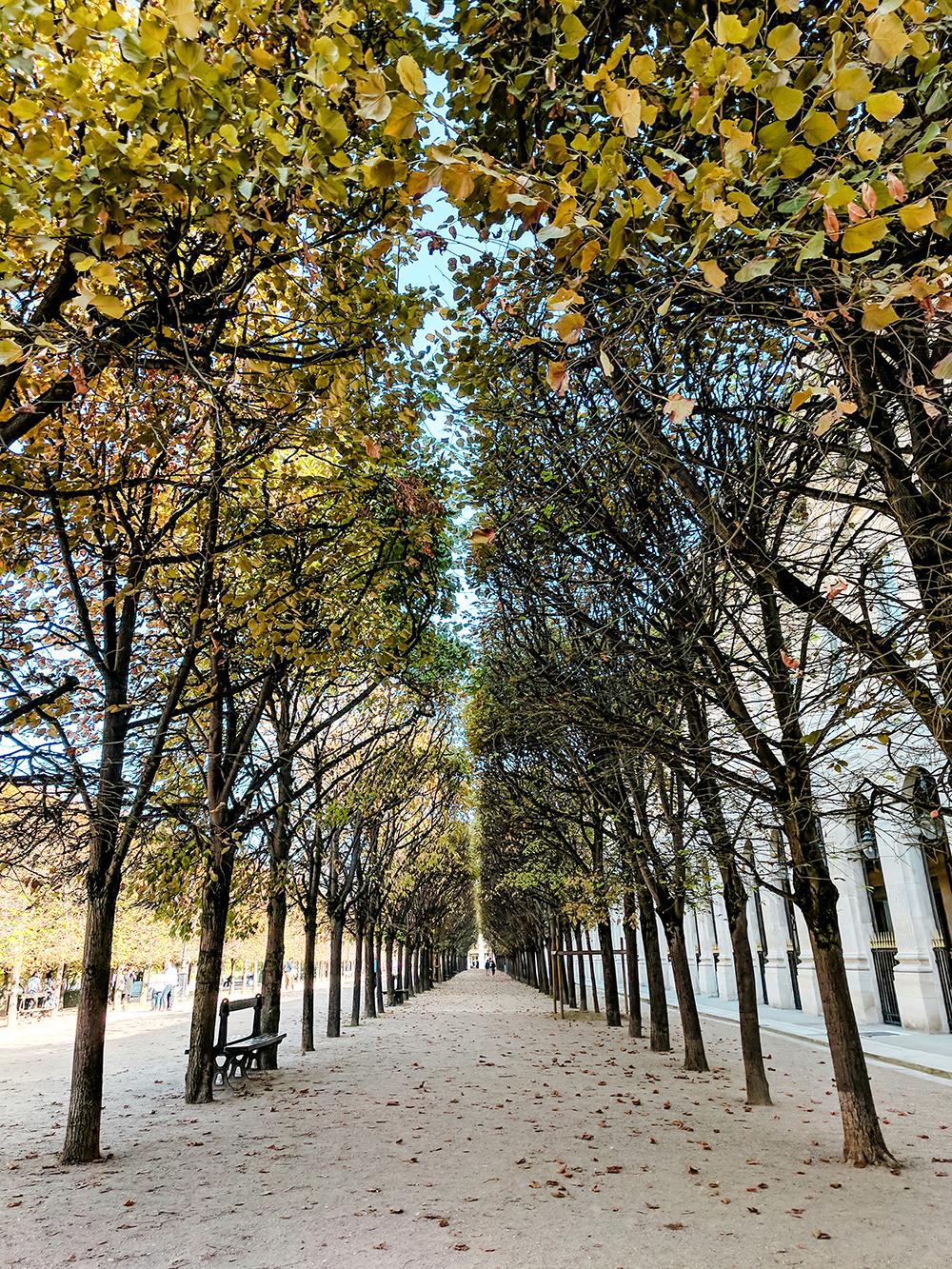tree-path.jpg