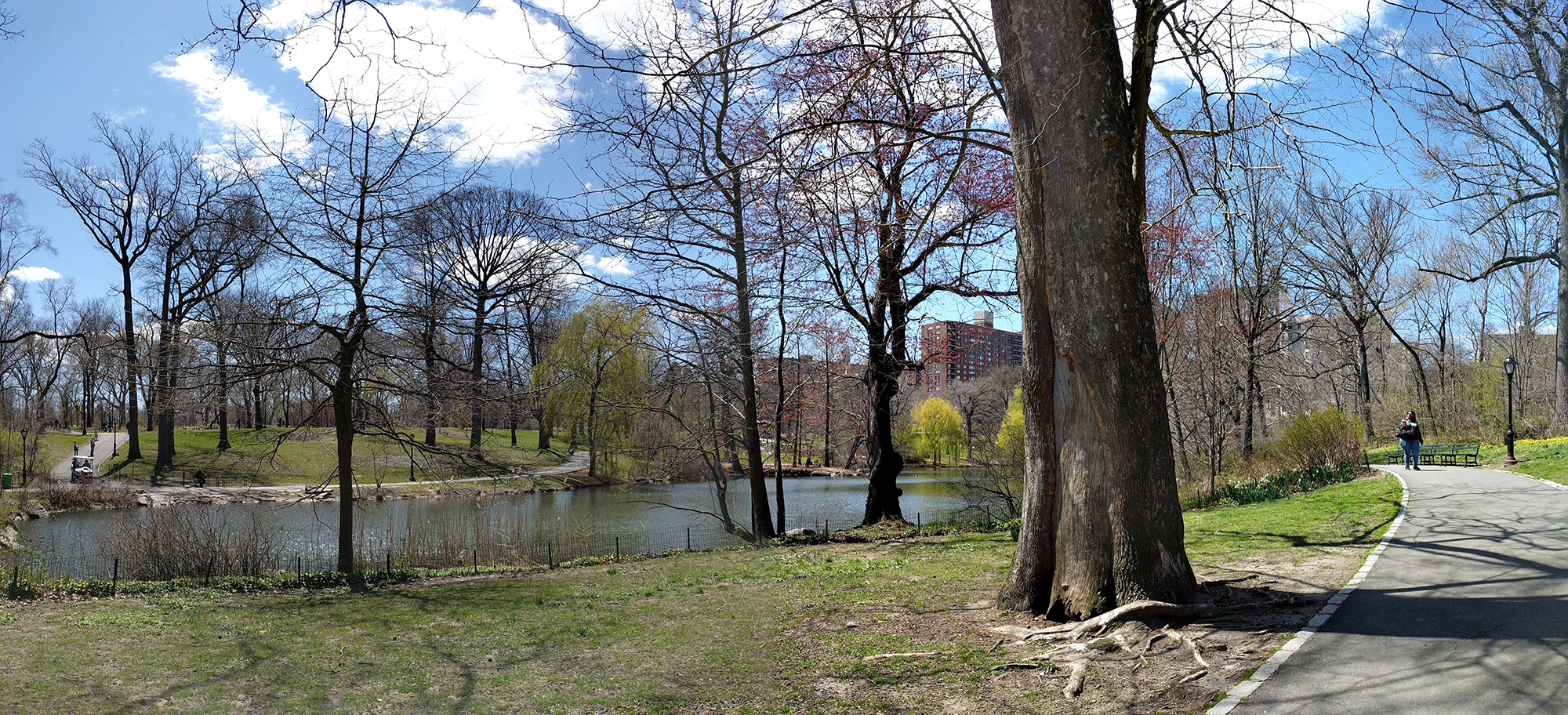 Central Park North Woods pano