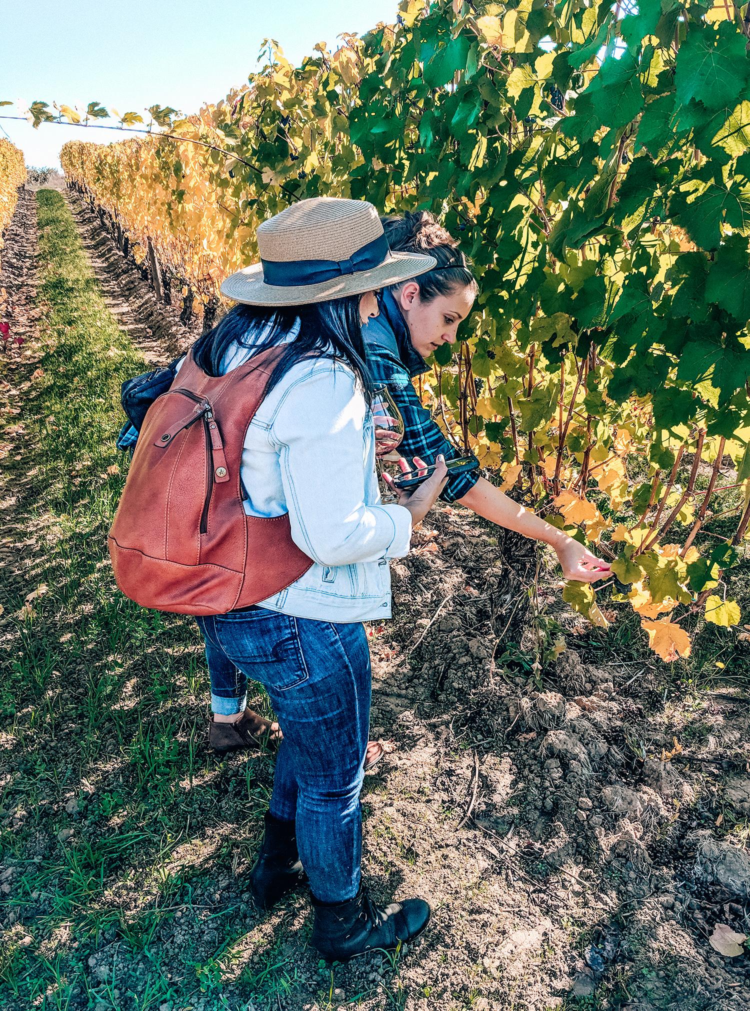 Adelsheim vines learning