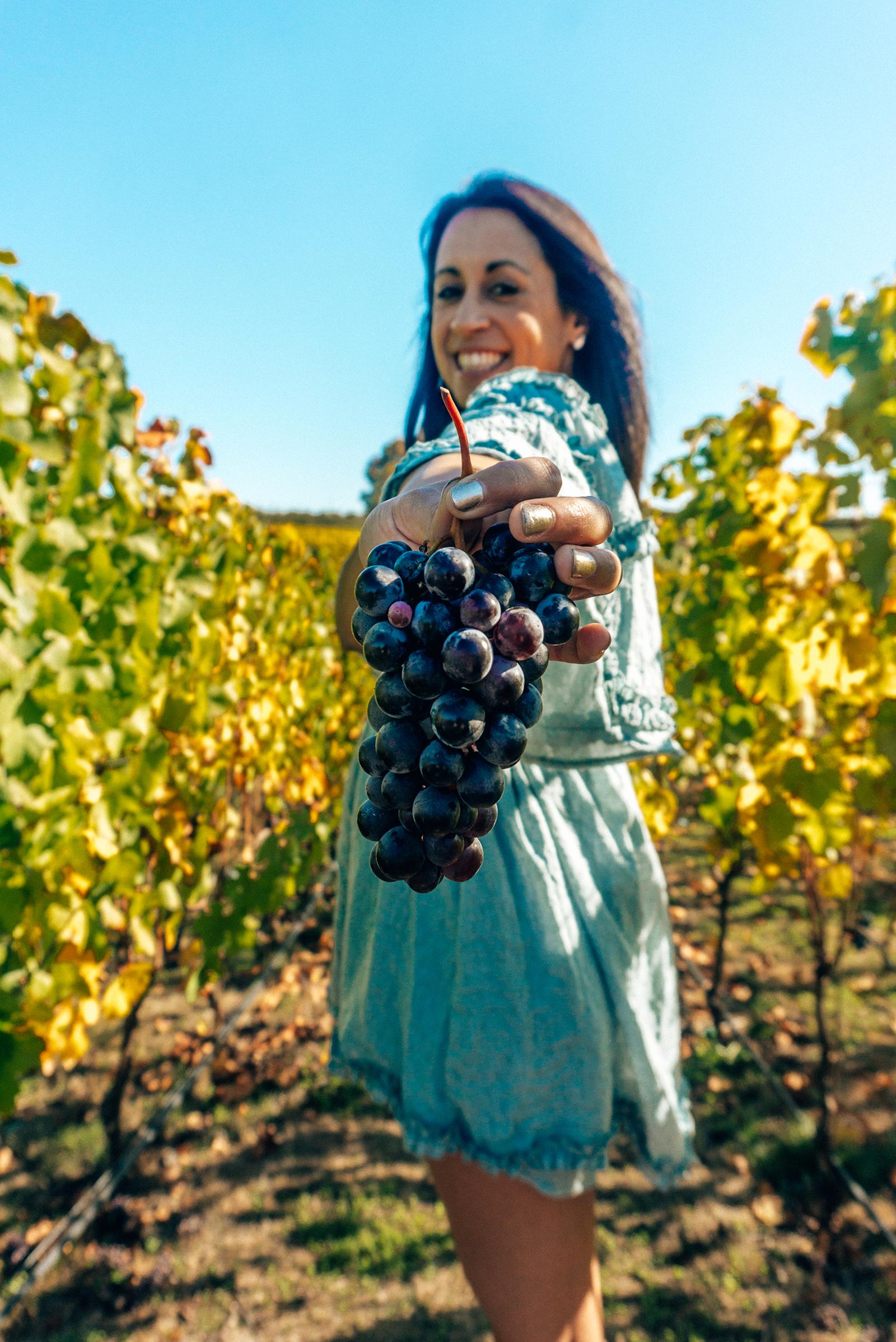 Adelsheim lindsey holding grapes