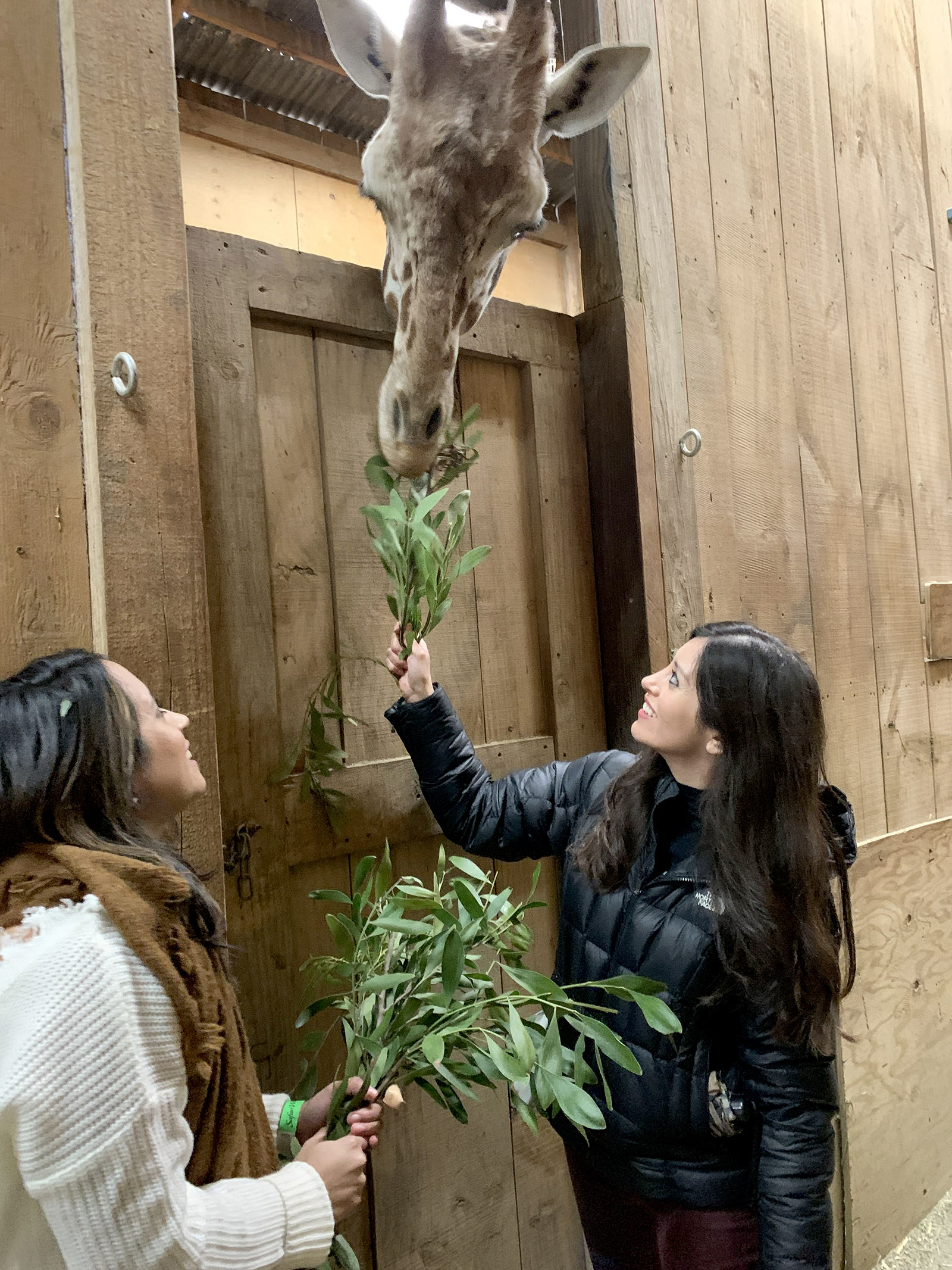 Vivian and I feeding giraffes