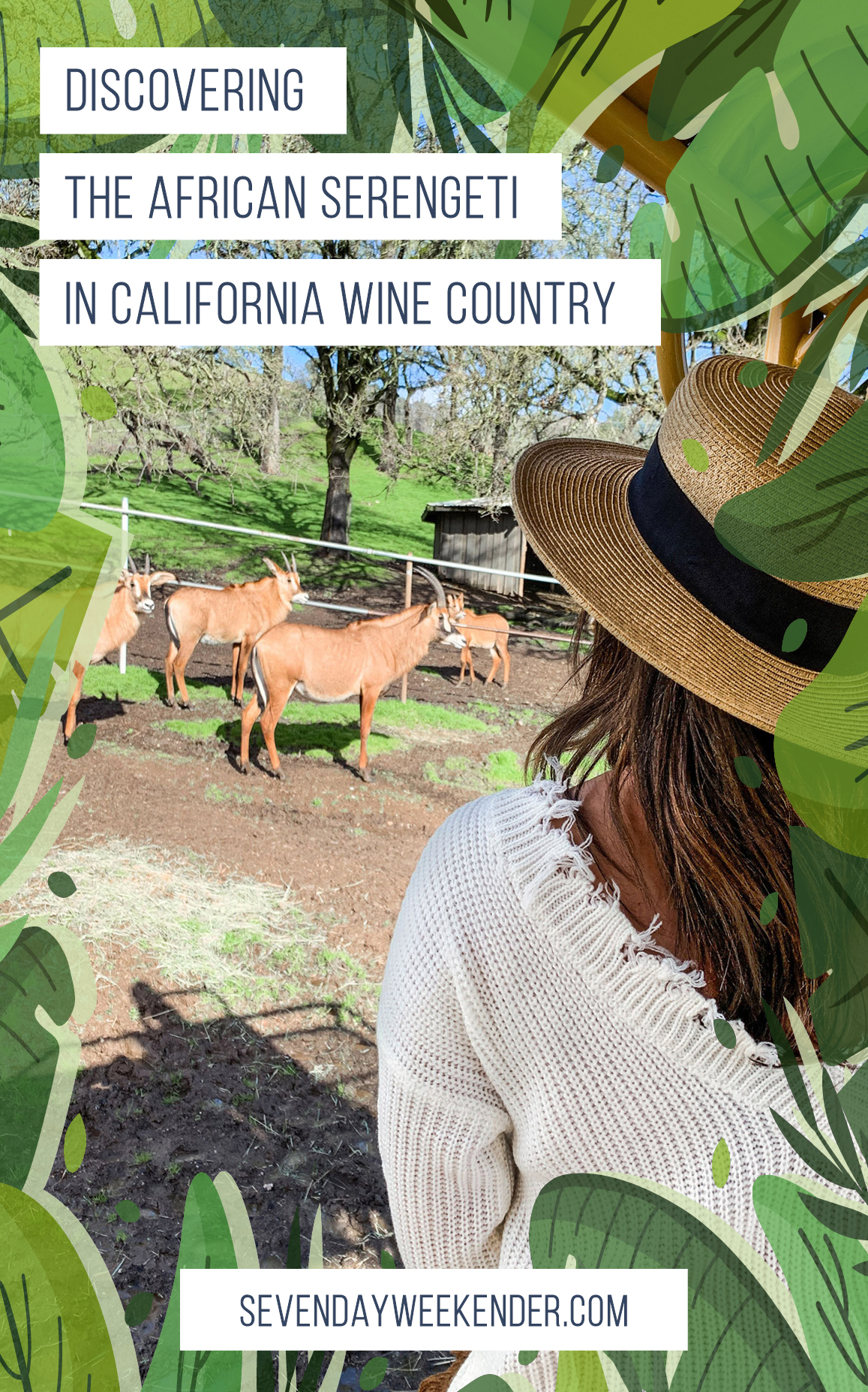 Discovering the African Serengeti in California Wine Country
