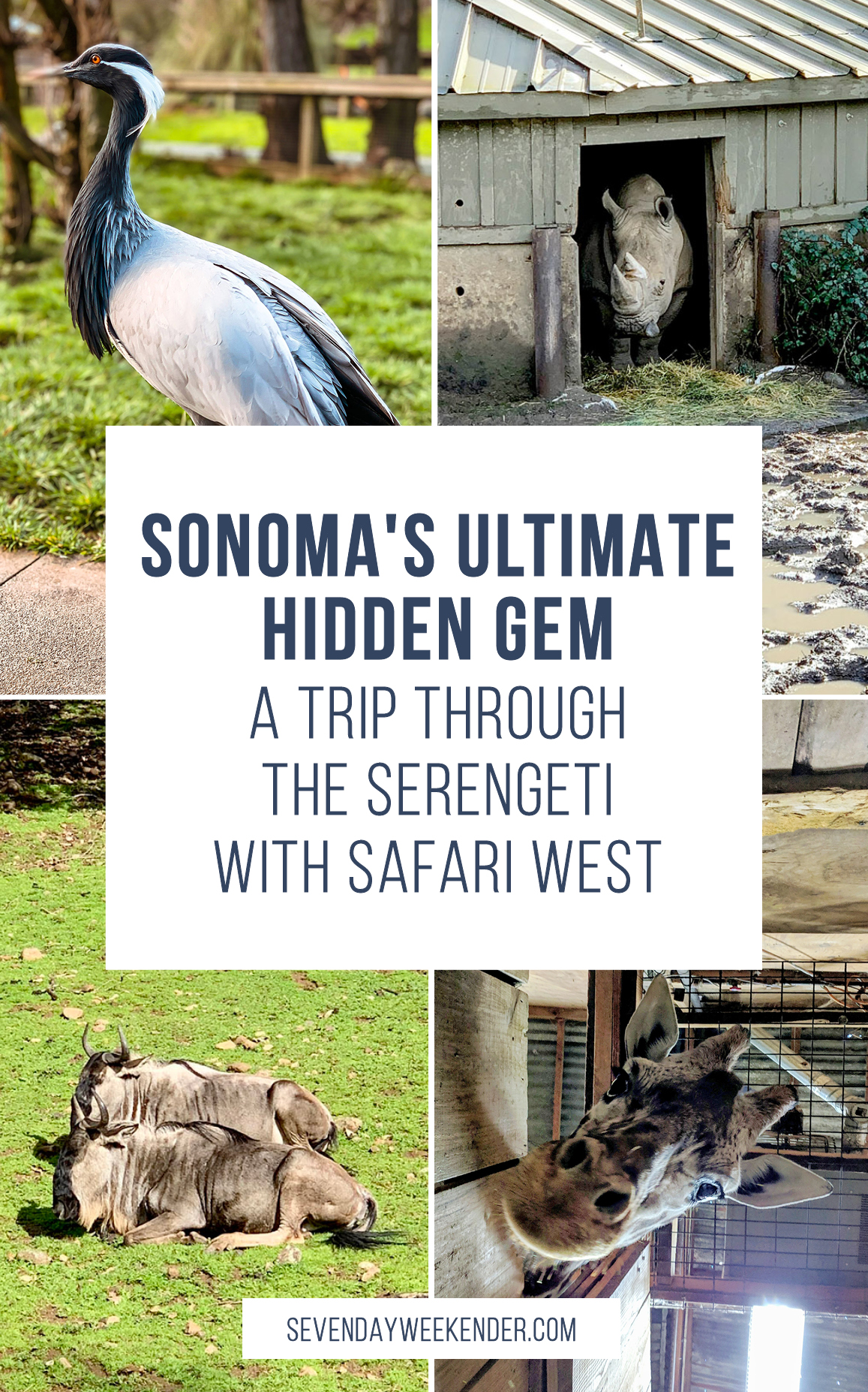 Sonoma's Ultimate Hidden Gem: Safari West