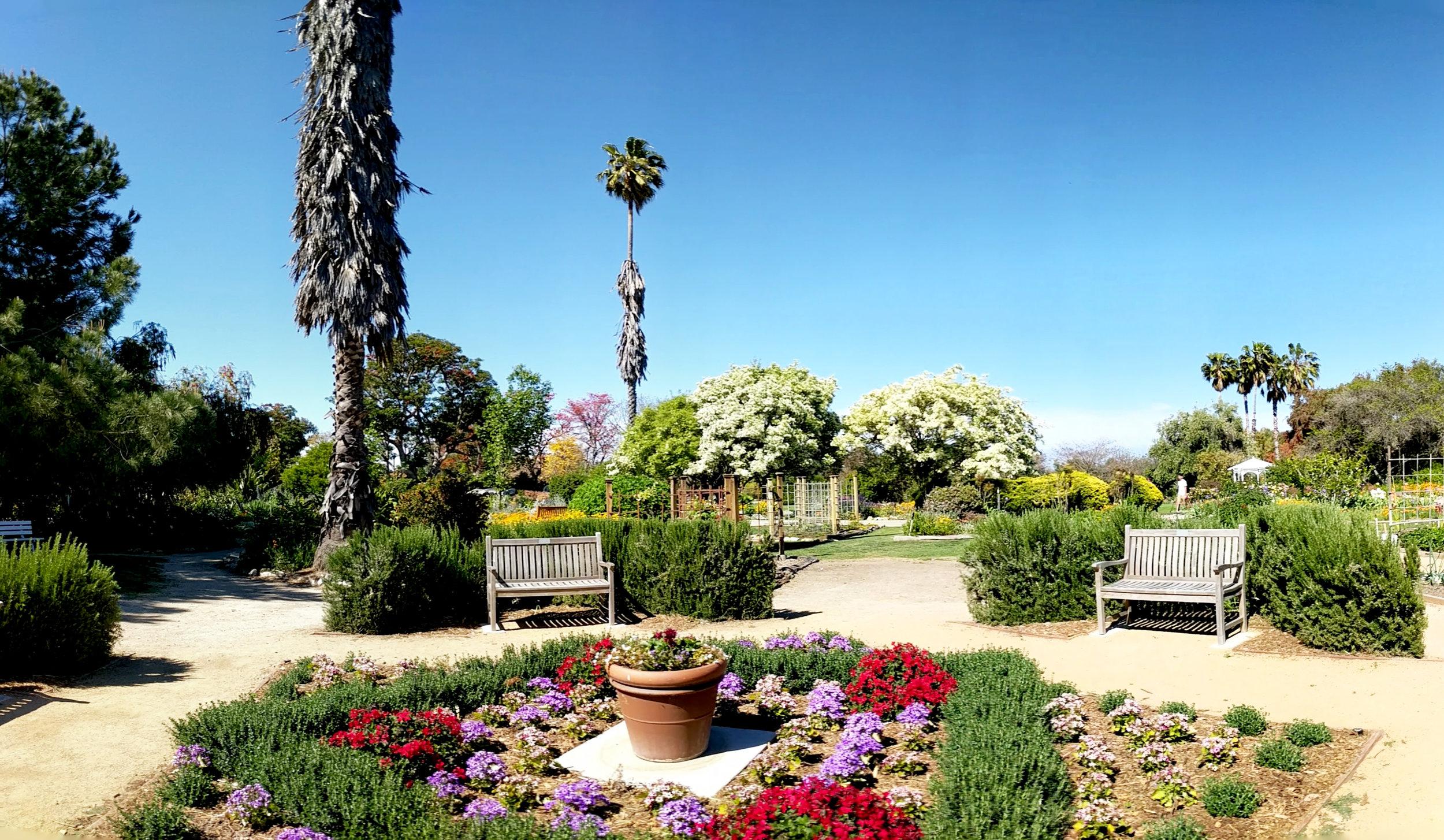Botanic Garden flowers