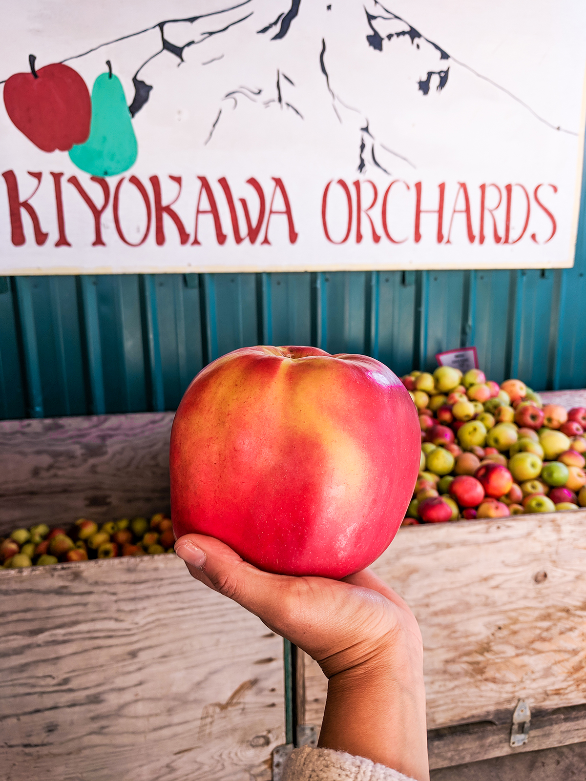 Fruit-loop-apple-Kiyokawa.jpg