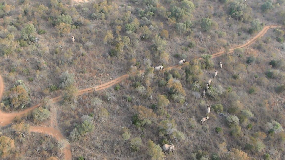 Section 1 Herd.jpg