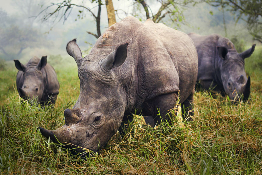 Rhinos-Programme.jpg