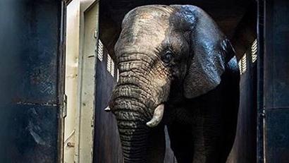 911-elephant.jpg