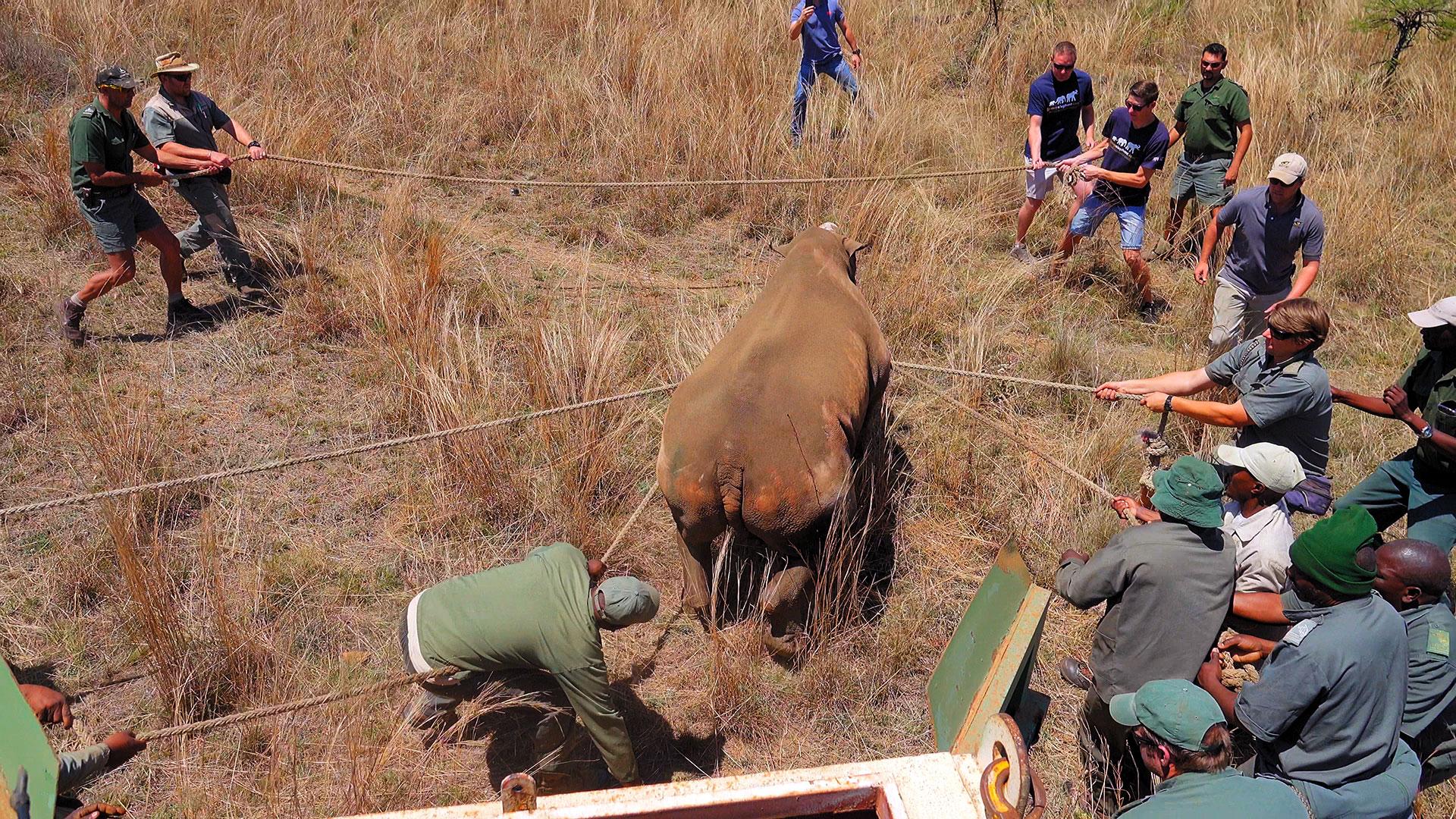 about-rhino-programme.jpg