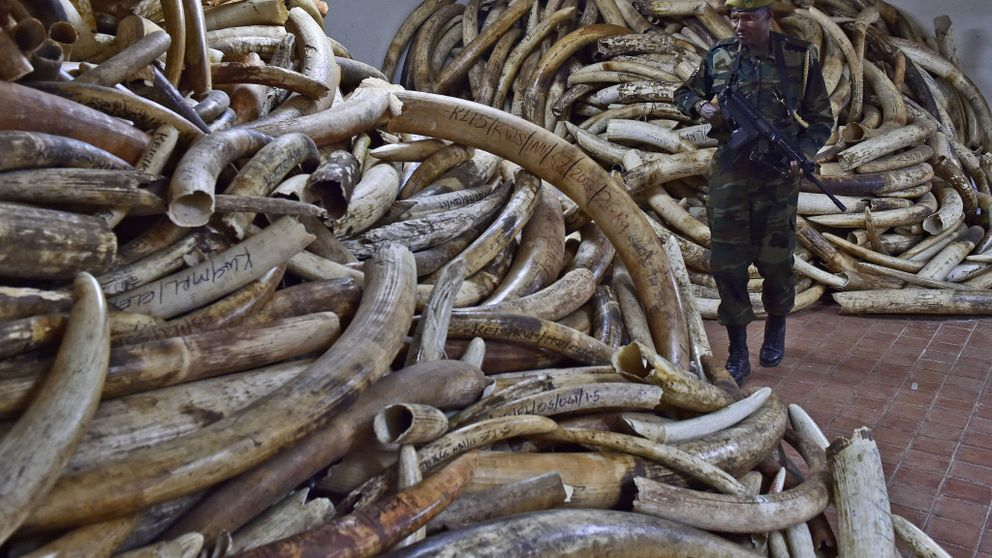 Campaigns against ivory have not ended the trade