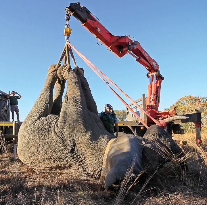 about-elephant-programme.jpg