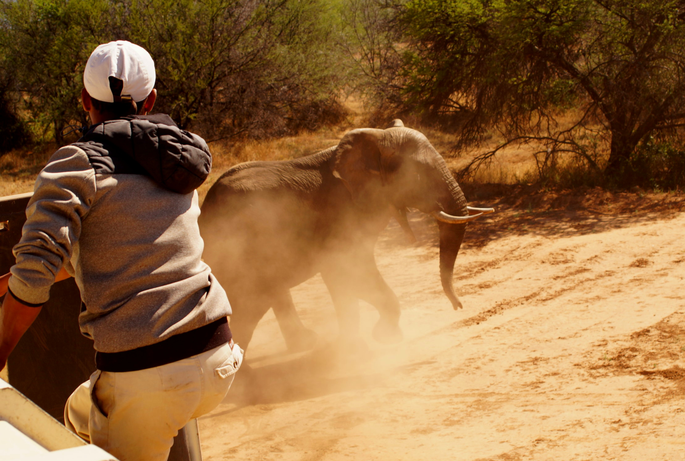 Kahle before disappearing into the bush in a cloud of dust at Samara Private Game Reserve. Photo: Ida Hansen