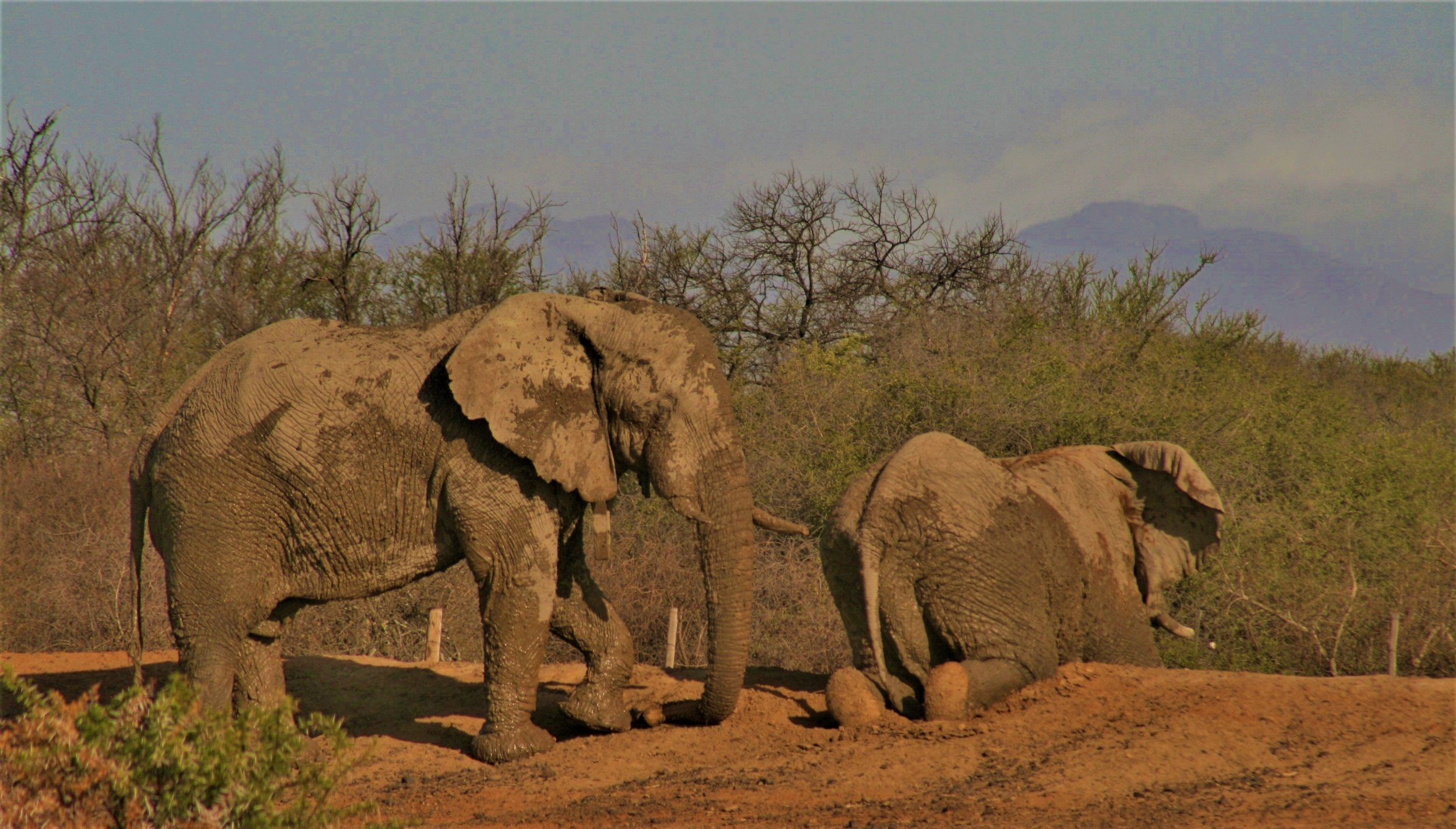 Kahle and Mvula having after a mudbath. Photo: Penny Pistorius