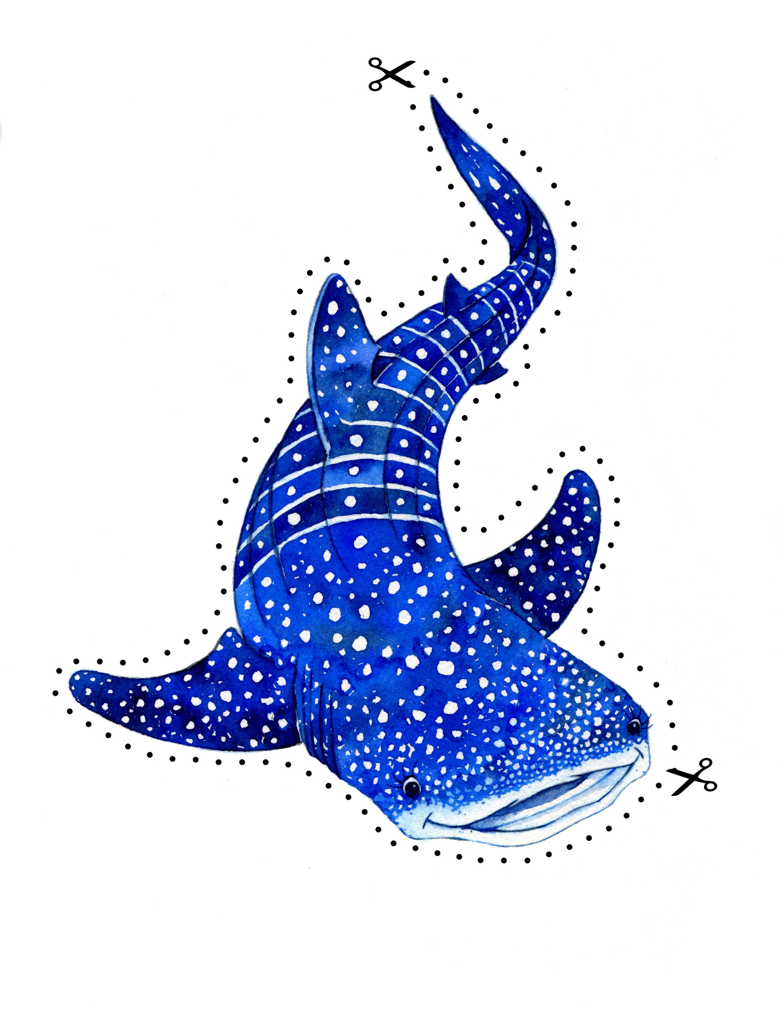 Ballena the Whale Shark