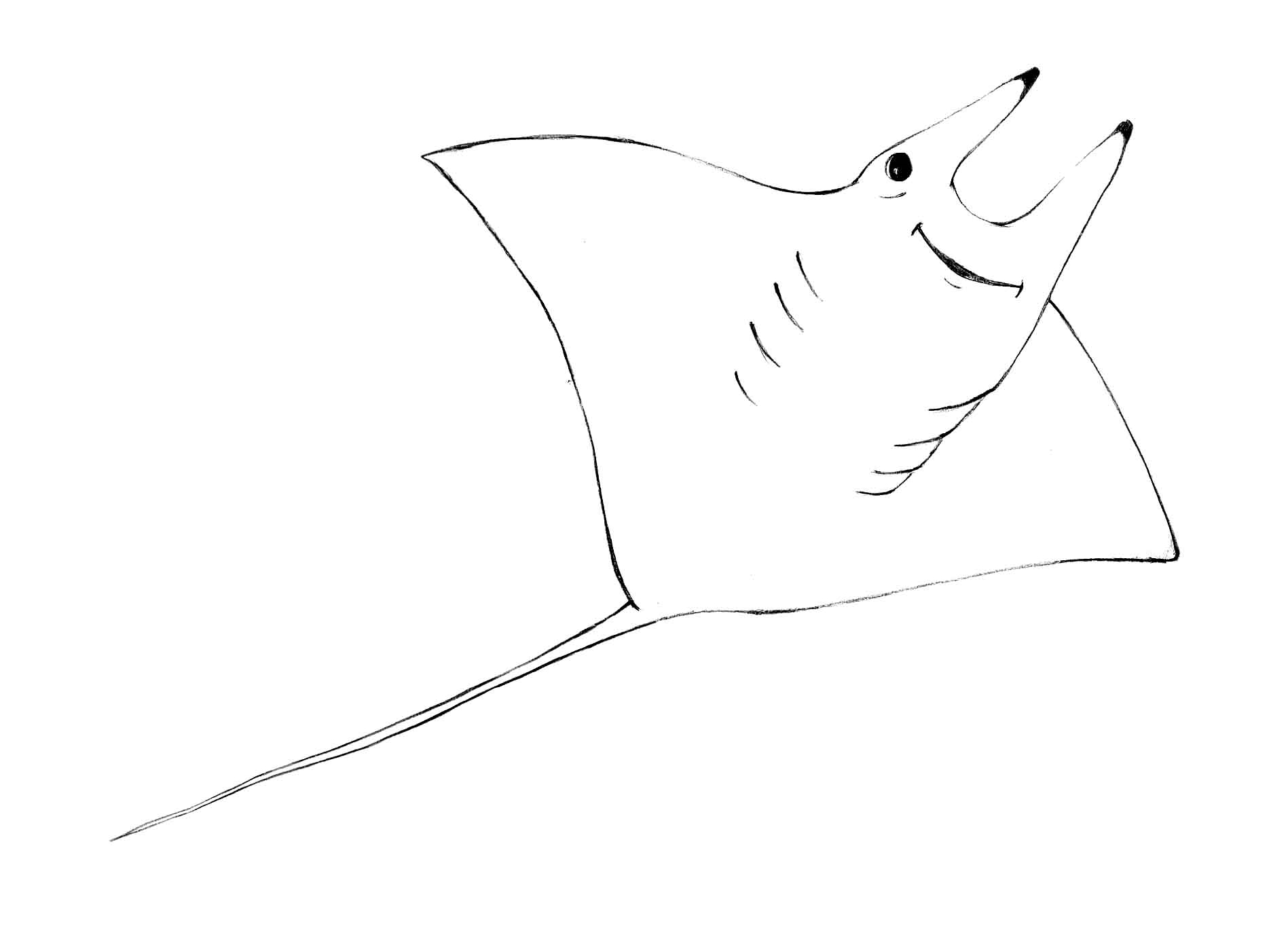 Coloring Version - Mobula.jpg