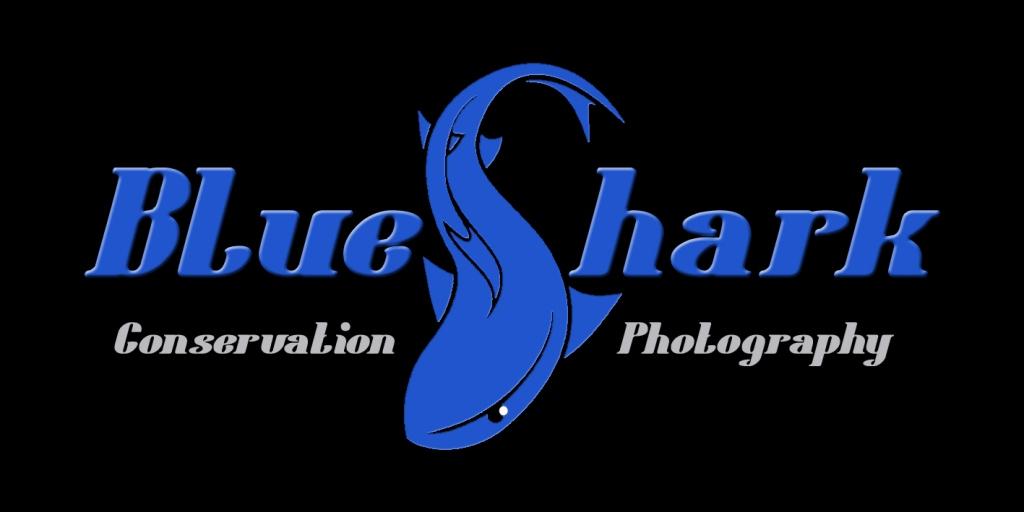 BlueShark 93kb.jpg