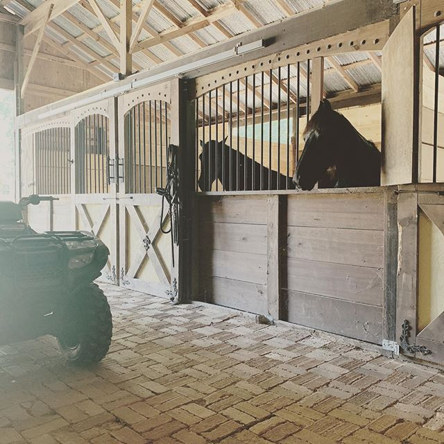 Good Morning from Cavalleria's Friesian horses Fortissimo and Tyrion! #friesiansofinstagram #friesiansporthorse #friesianhorse #cavallerialife
