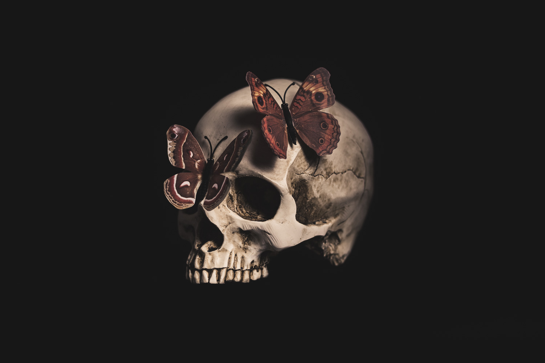 still-life-06-air-light_blood_butterflies_skull_vanitas.jpg