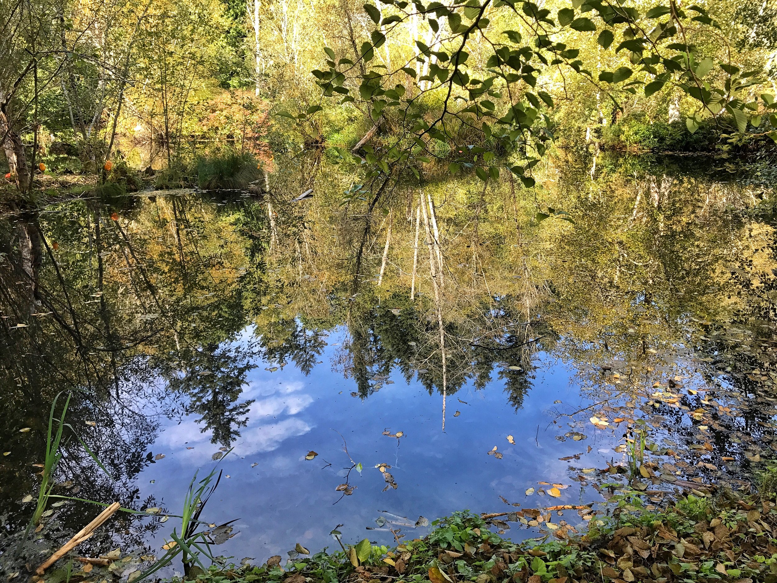 Pond at  Bloedel Reserve , Bainbridge Island, photo, Monty Hunter