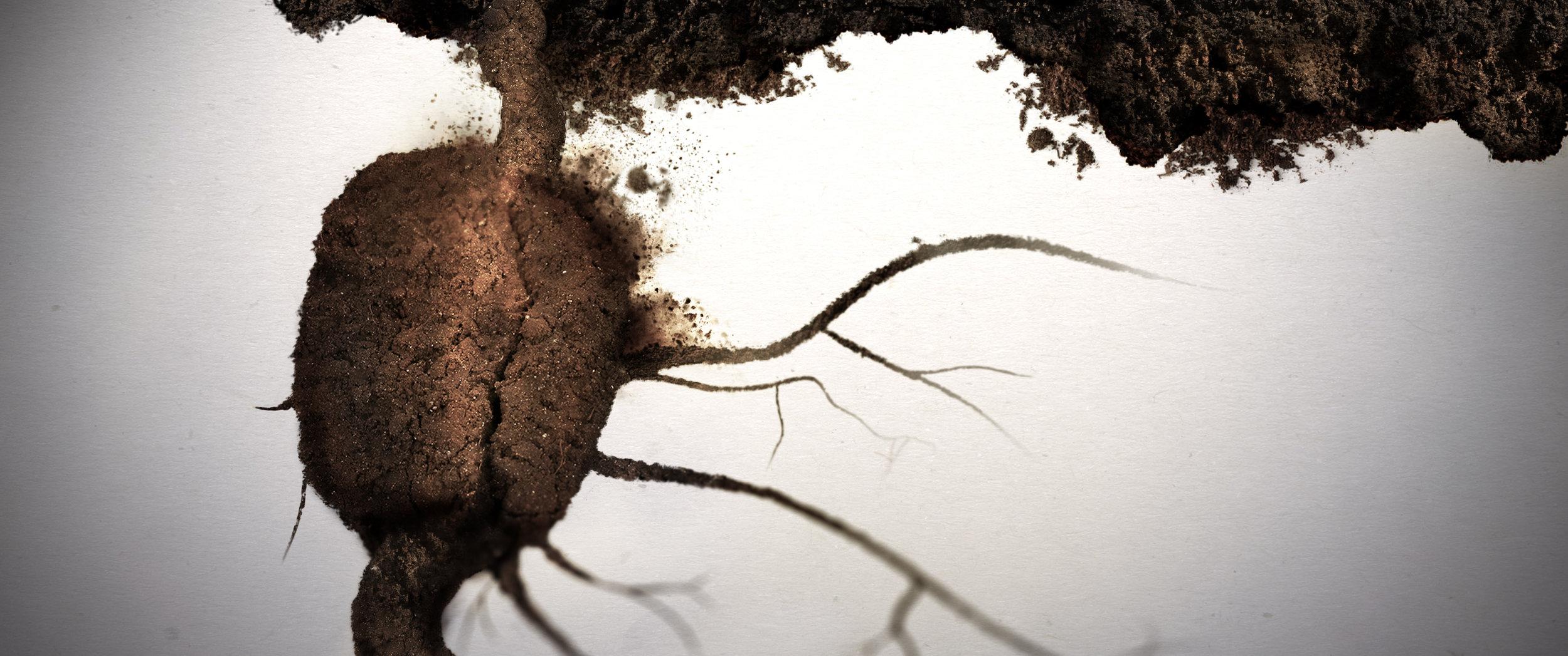 Bayer  |  Dirt Rich  | CD / Director